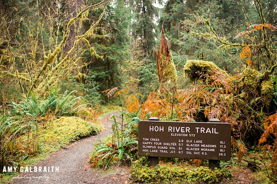 hoh river trailhead in olympic national park